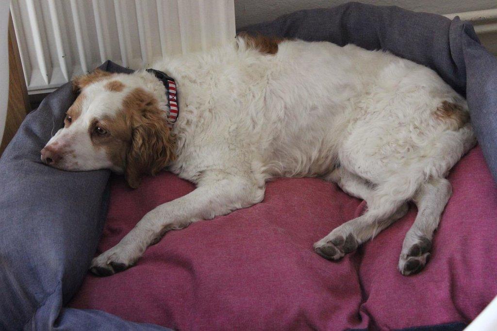 Bildertagebuch - MILLY, eine aktive, freundliche Hundelady sucht ein liebevolles Zuhause 38391240ap