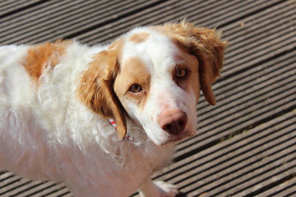 Bildertagebuch - MILLY, eine aktive, freundliche Hundelady sucht ein liebevolles Zuhause 38391242tc