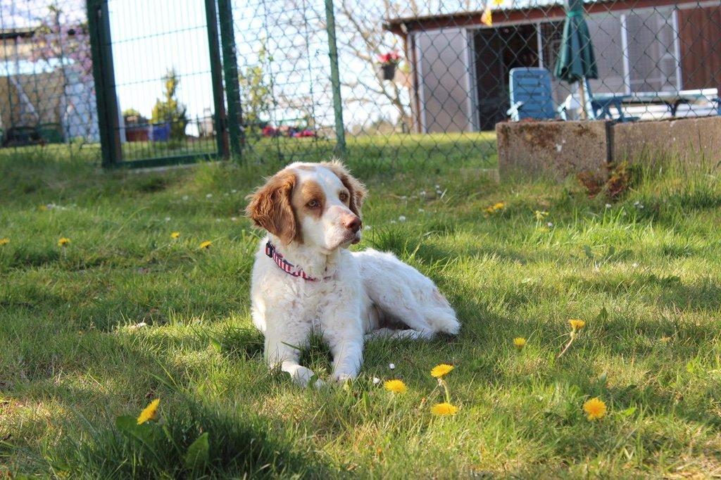 Bildertagebuch - MILLY, eine aktive, freundliche Hundelady sucht ein liebevolles Zuhause 38391243lm