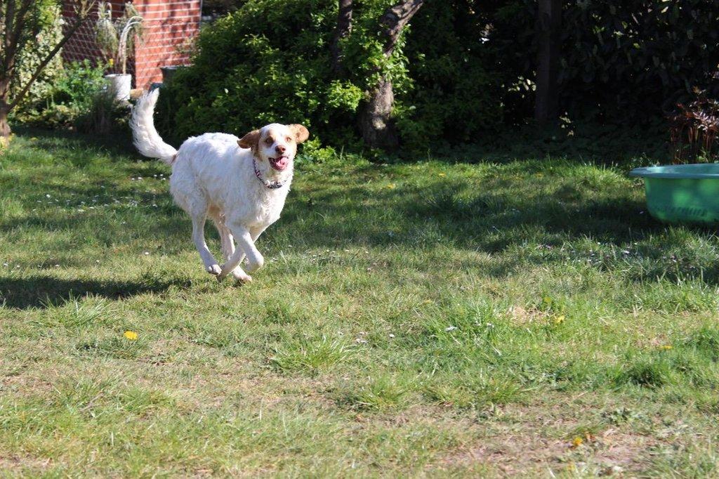 Bildertagebuch - MILLY, eine aktive, freundliche Hundelady sucht ein liebevolles Zuhause 38391244dl