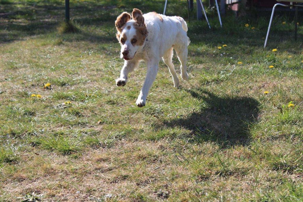 Bildertagebuch - MILLY, eine aktive, freundliche Hundelady sucht ein liebevolles Zuhause 38391246bg