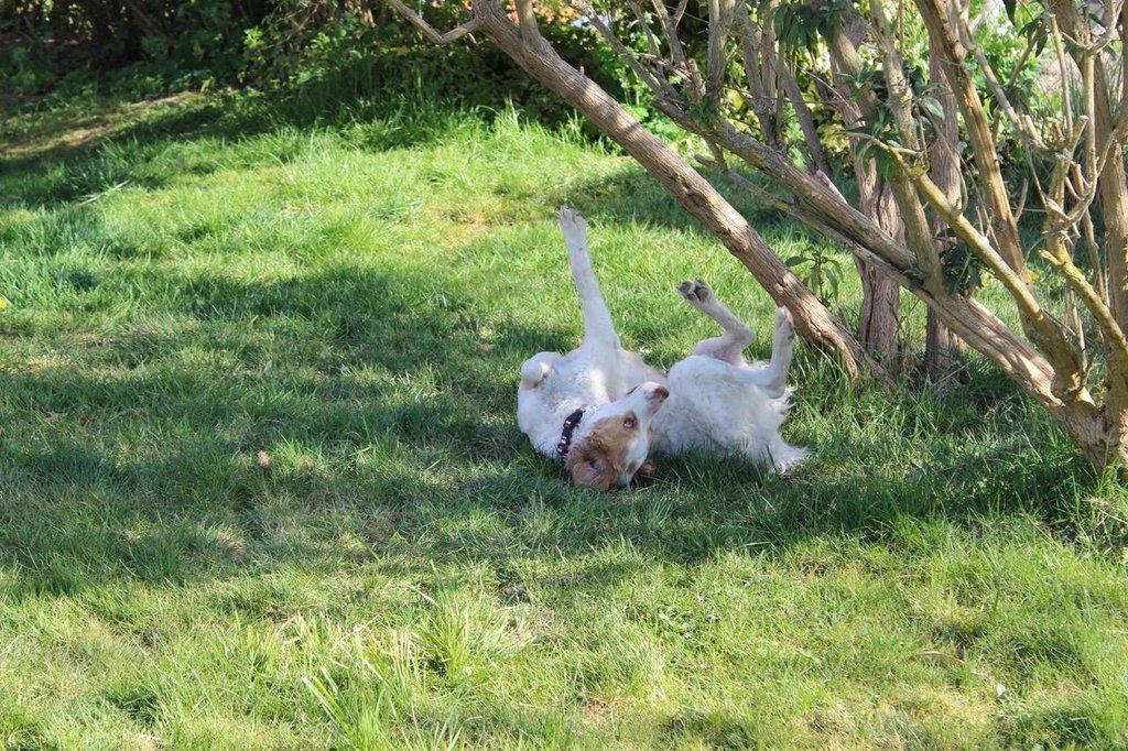 Bildertagebuch - MILLY, eine aktive, freundliche Hundelady sucht ein liebevolles Zuhause 38391248wc