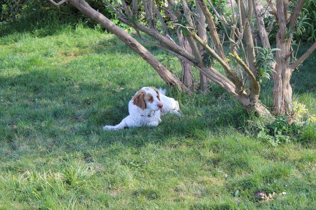 Bildertagebuch - MILLY, eine aktive, freundliche Hundelady sucht ein liebevolles Zuhause 38391249bk