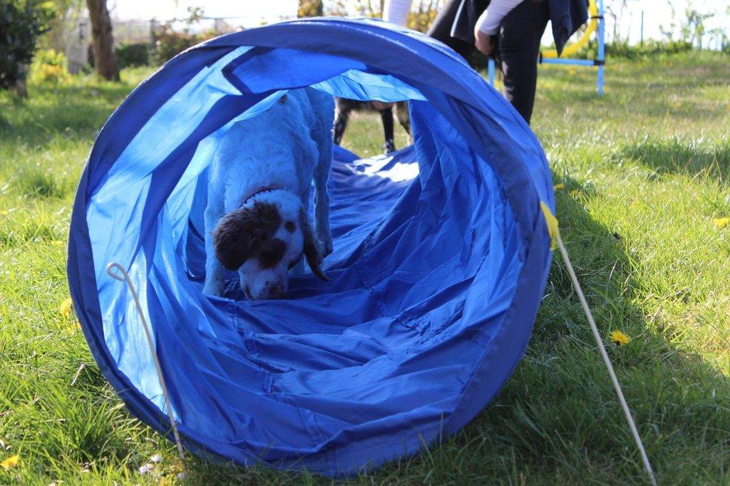 Bildertagebuch - MILLY, eine aktive, freundliche Hundelady sucht ein liebevolles Zuhause 38391250cv