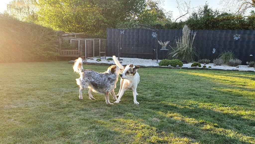 Bildertagebuch - SULAIKA und ihre Geschwister konnten vor Hundefängern gerettet werden - VERMITTELT - 38406143pk