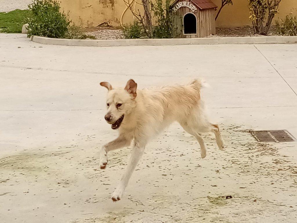 Bildertagebuch - PELUCA ist ein sehr freundlicher, verträgliche Junghund - VERMITTELT - 38419018if