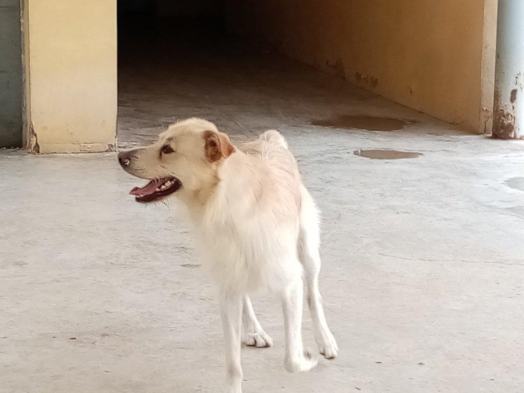 Bildertagebuch - PELUCA ist ein sehr freundlicher, verträgliche Junghund - VERMITTELT - 38419019og