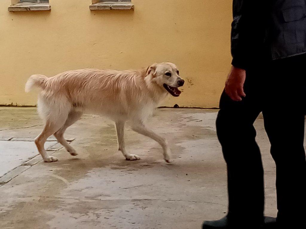 Bildertagebuch - PELUCA ist ein sehr freundlicher, verträgliche Junghund - VERMITTELT - 38419020uf