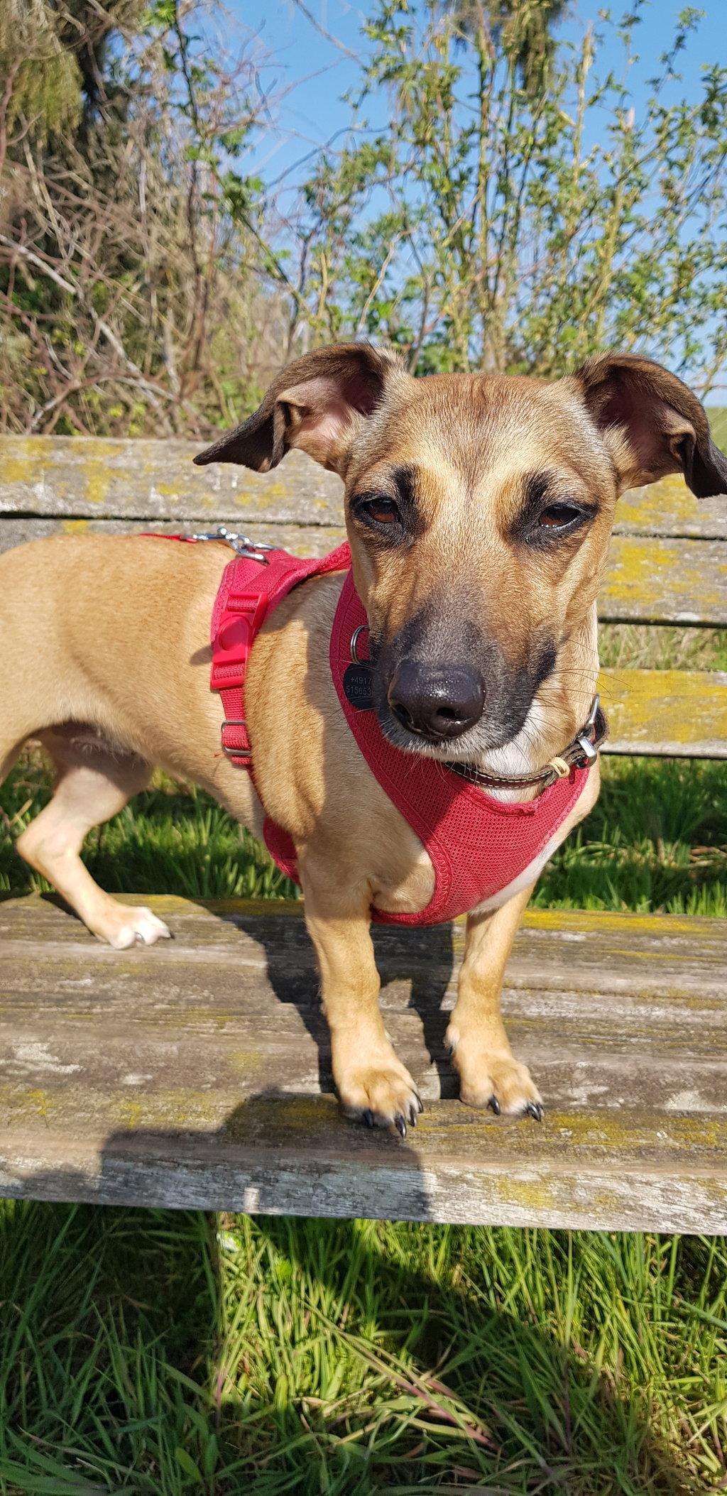 Bildertagebuch - LUNA wurde als Schmusehund angeschafft - VERMITTELT - 38425486xm
