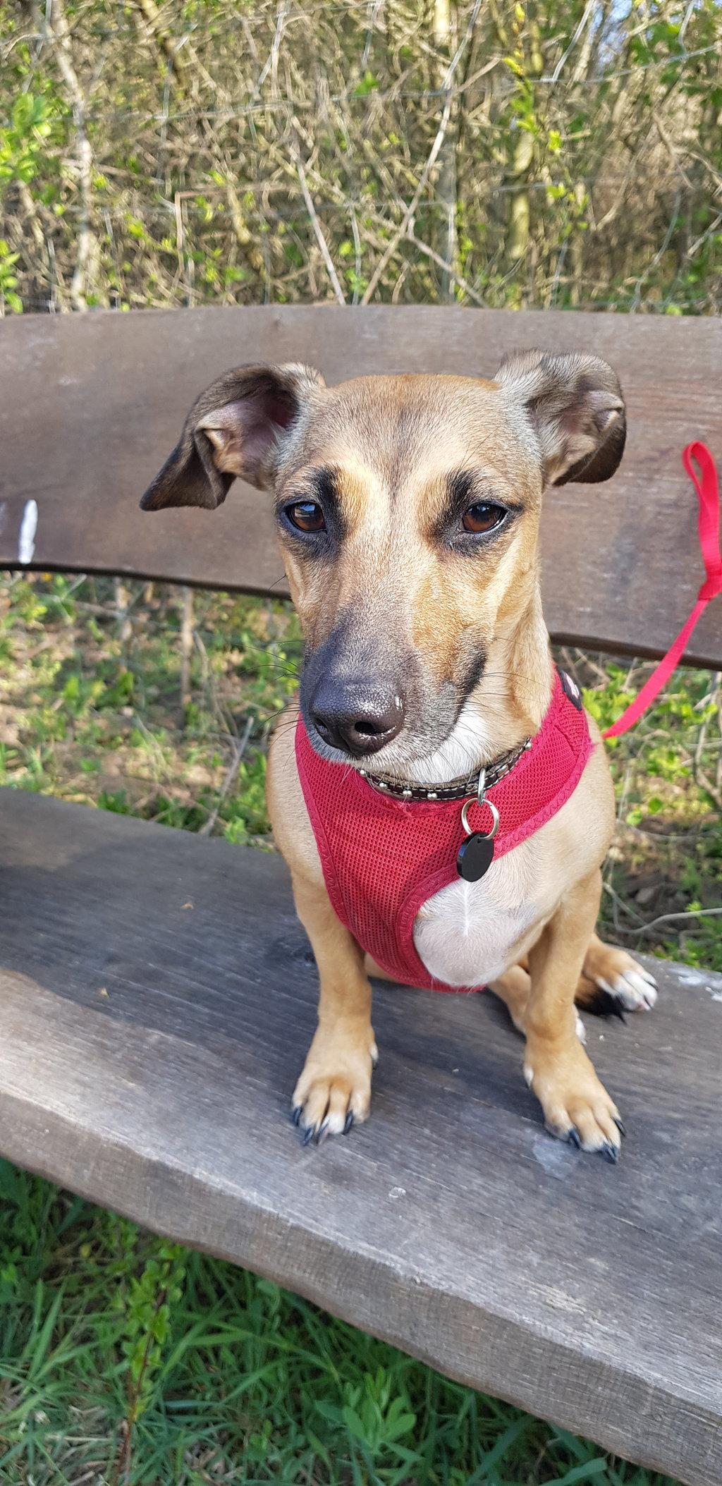 Bildertagebuch - LUNA wurde als Schmusehund angeschafft - VERMITTELT - 38425487uo