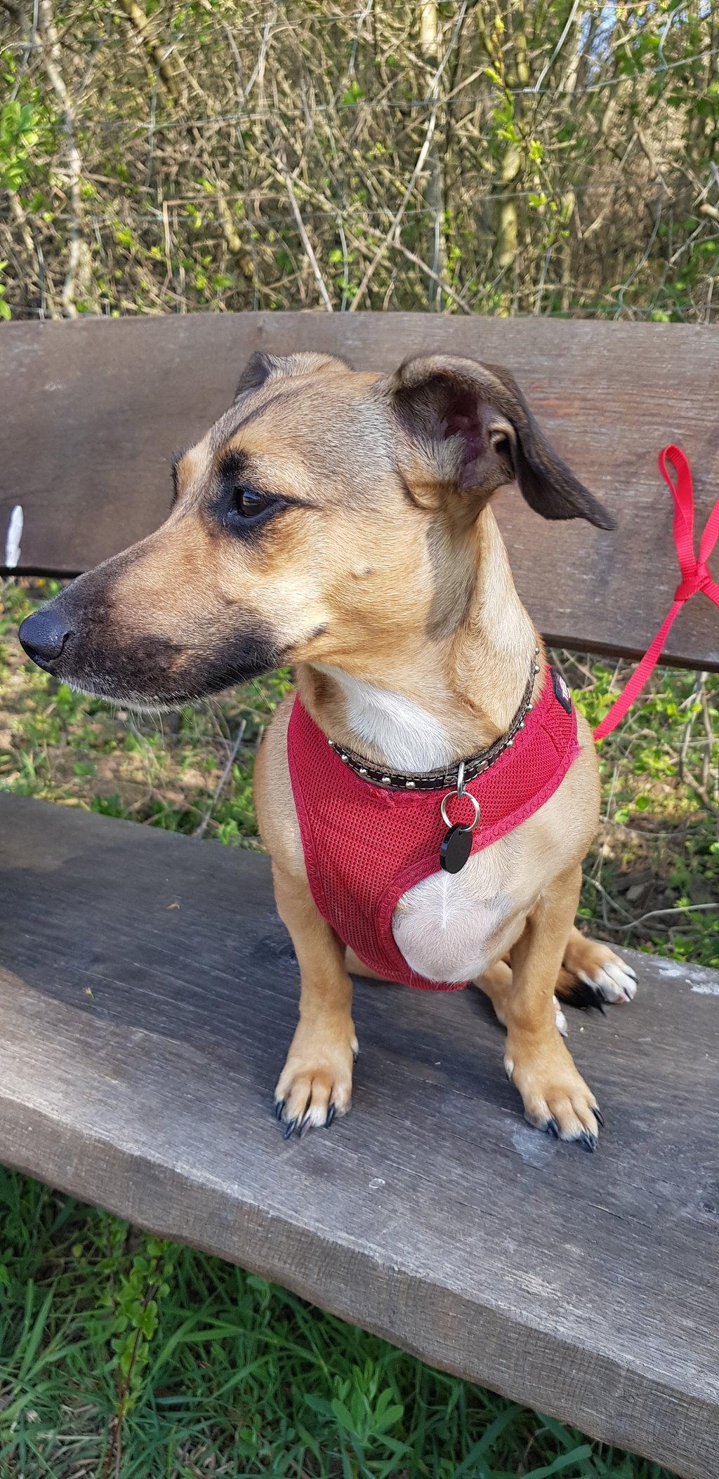 Bildertagebuch - LUNA wurde als Schmusehund angeschafft - VERMITTELT - 38425488ne