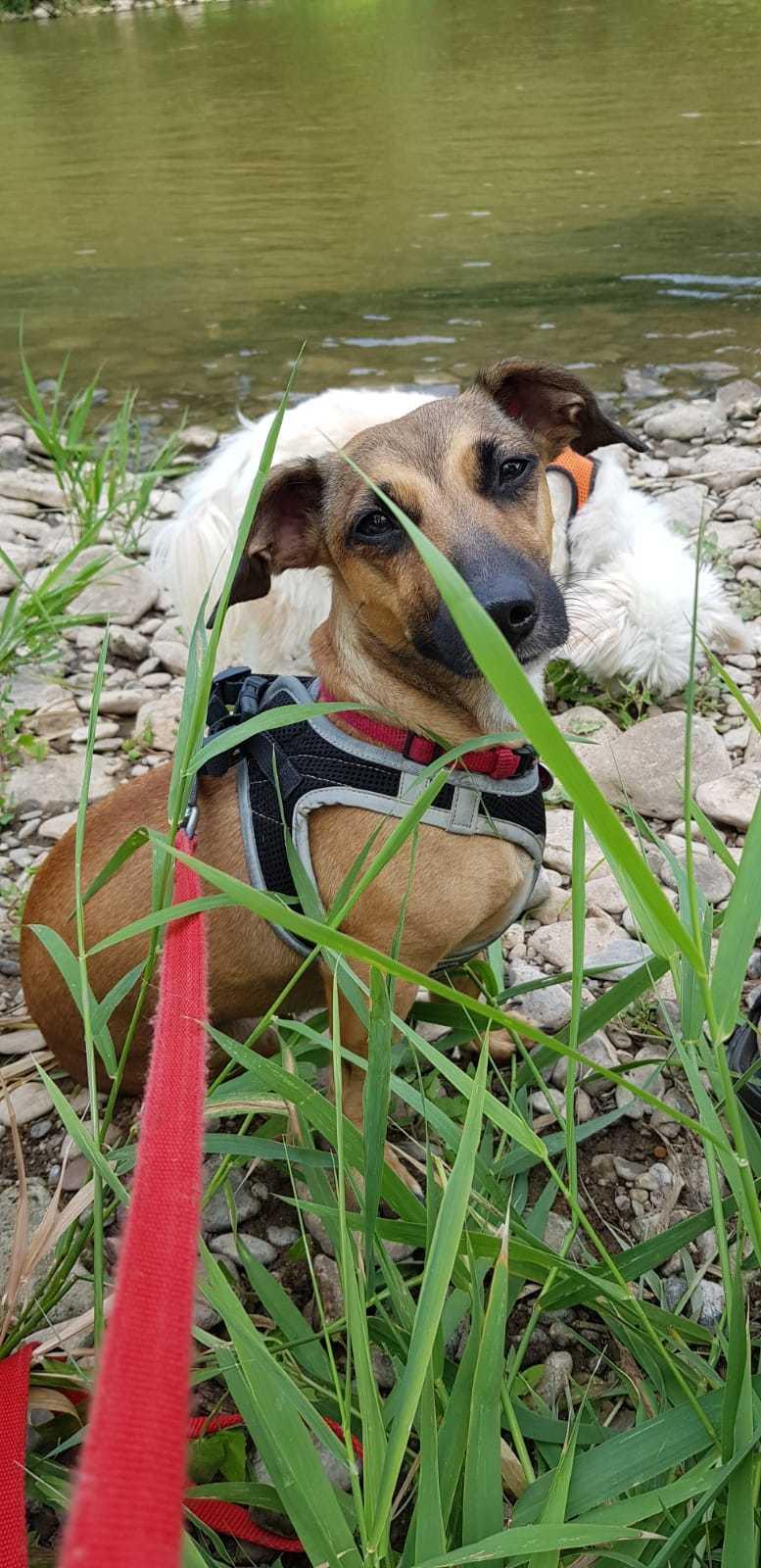 Bildertagebuch - LUNA wurde als Schmusehund angeschafft - VERMITTELT - 38425492at