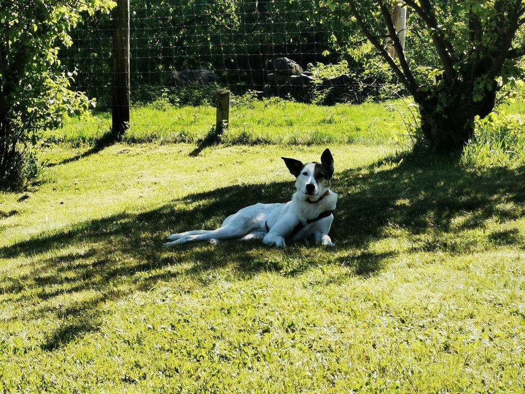 Bildertagebuch - SULAIKA und ihre Geschwister konnten vor Hundefängern gerettet werden - VERMITTELT - 38626308cu
