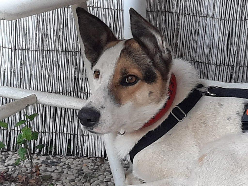 Bildertagebuch - SULAIKA und ihre Geschwister konnten vor Hundefängern gerettet werden - VERMITTELT - 38626312dg