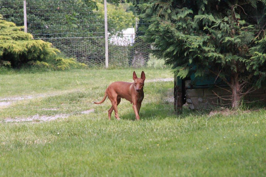 Bildertagebuch - MARIA (II) gehört einer seltenen Hunderasse an und wurde trotzdem ausgesetzt... 38677029ji