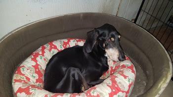 Bildertagebuch - OLIVER, charmanter Hundesenior sucht ein ruhiges Plätzchen... 38752332gc