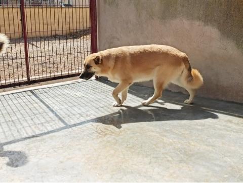 Bildertagebuch - LUAZ und ihr Hundefreund waren nicht mehr gewollt... 38757777lt