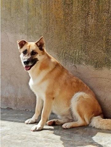 Bildertagebuch - LUAZ und ihr Hundefreund waren nicht mehr gewollt... 38757778td