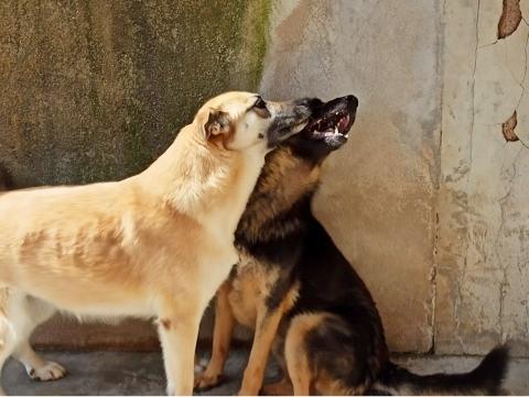 Bildertagebuch - LUAZ und ihr Hundefreund waren nicht mehr gewollt... 38757780mf