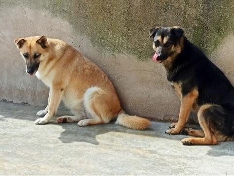 Bildertagebuch - LUAZ und ihr Hundefreund waren nicht mehr gewollt... 38757781os