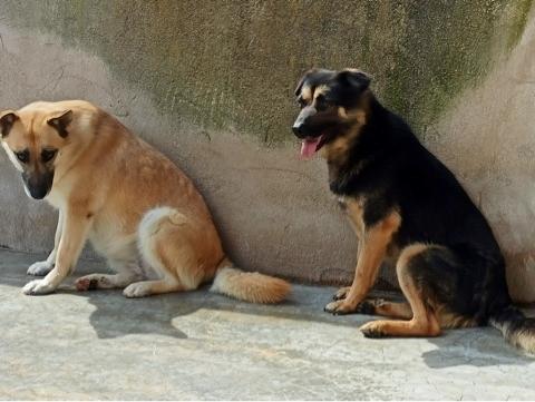Bildertagebuch - SOMBRE und seine Freundin Luaz wurden einfach verjagt... 38757965ae