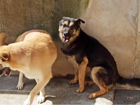 Bildertagebuch - SOMBRE und seine Freundin Luaz wurden einfach verjagt... 38757966vj