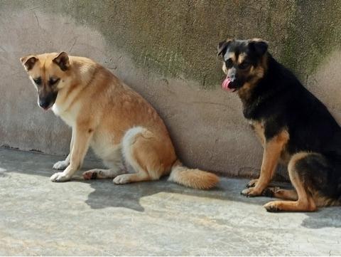 Bildertagebuch - SOMBRE und seine Freundin Luaz wurden einfach verjagt... 38757967og