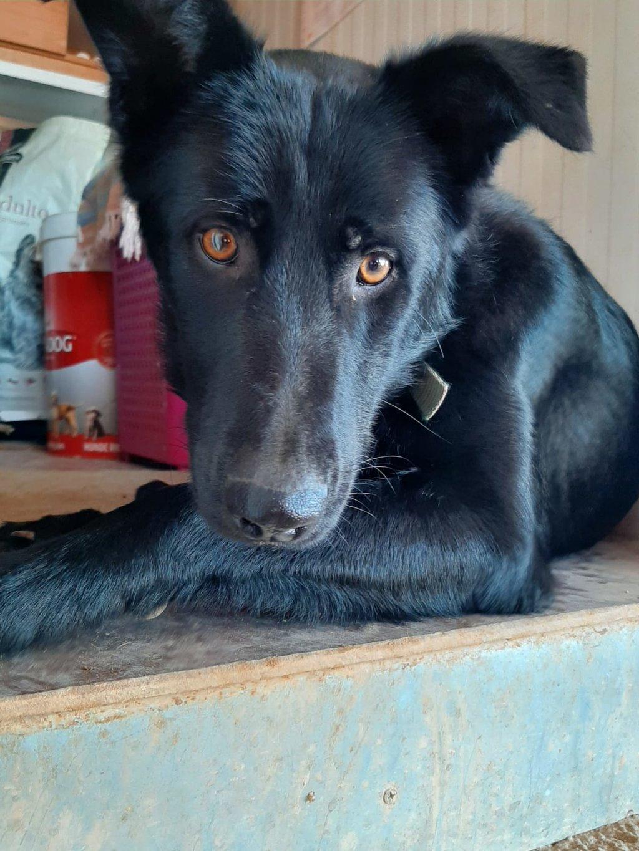 Bildertagebuch - BLACKY (II), ein unkomplizierter, fröhlicher Hund sucht ein Zuhause 39020531th