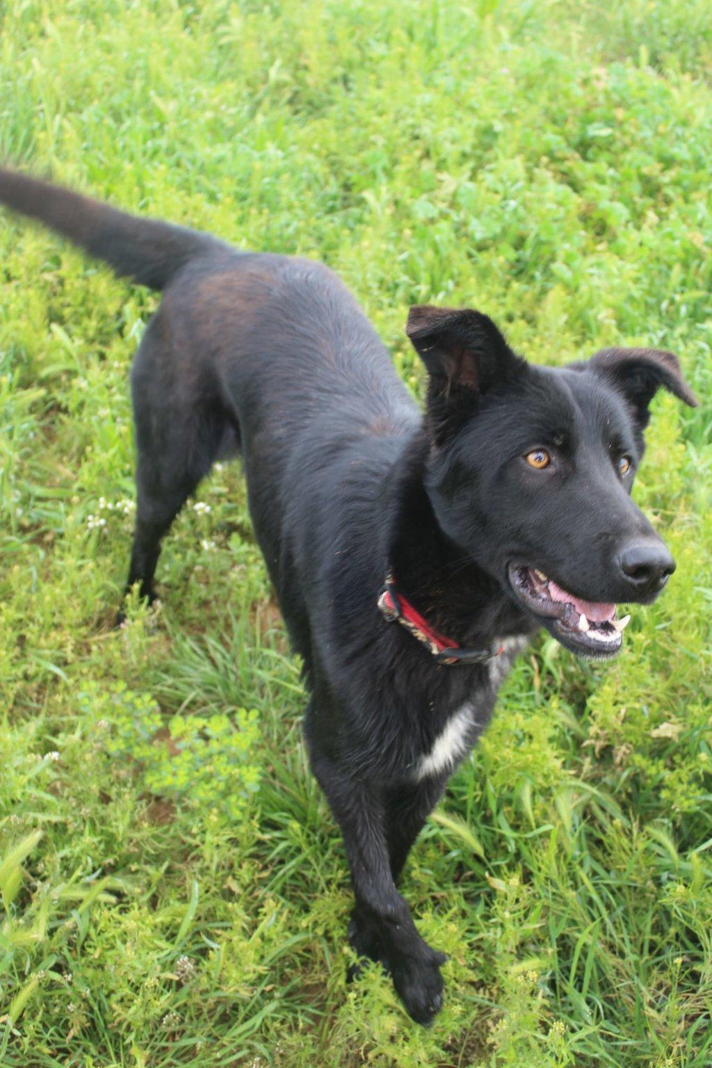 Bildertagebuch - BLACKY (II), ein unkomplizierter, fröhlicher Hund sucht ein Zuhause 39020534go