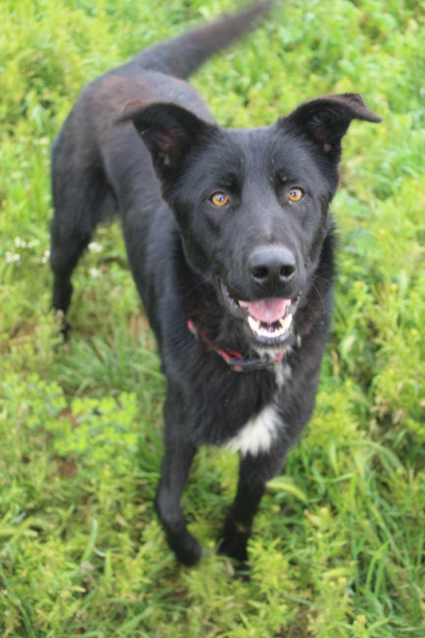 Bildertagebuch - BLACKY (II), ein unkomplizierter, fröhlicher Hund sucht ein Zuhause 39020535pn