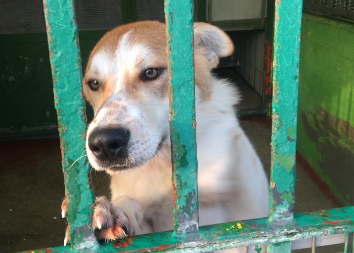 Bildertagebuch - NEMO lernt fleissig das Hundeeinmaleins... 39025814km