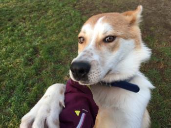 Bildertagebuch - NEMO lernt fleissig das Hundeeinmaleins... 39025816kx