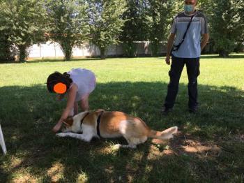 Bildertagebuch - NEMO lernt fleissig das Hundeeinmaleins... 39025817sk