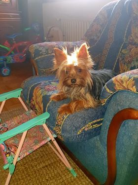 Bildertagebuch - SILA, von ihrem Besitzer ins Tierheim abgeschoben... 39051273uj