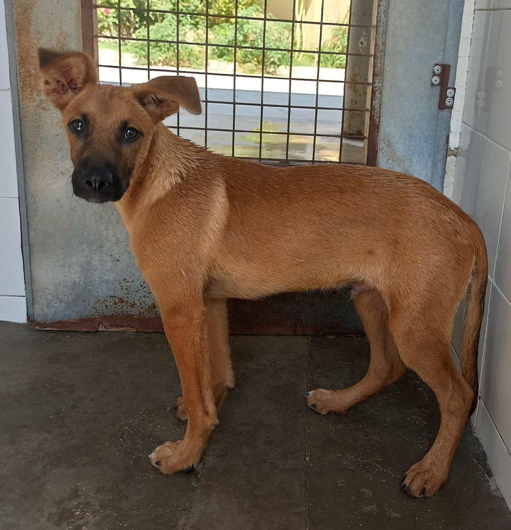 Bildertagebuch - DUMBO, noch kleiner Hundemann mit noch großen Ohren... RESERVIERT 39051920pl