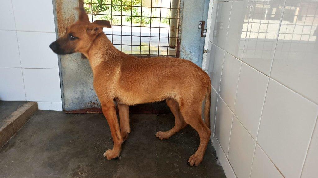 Bildertagebuch - DUMBO, noch kleiner Hundemann mit noch großen Ohren... RESERVIERT 39051921dr