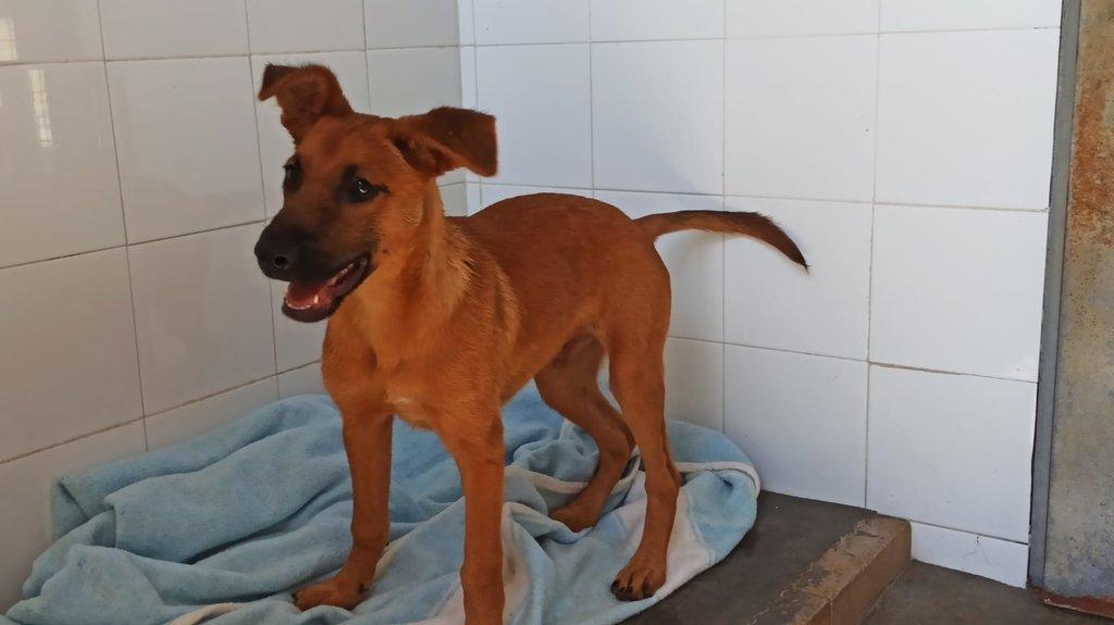 Bildertagebuch - DUMBO, noch kleiner Hundemann mit noch großen Ohren... RESERVIERT 39051922gh