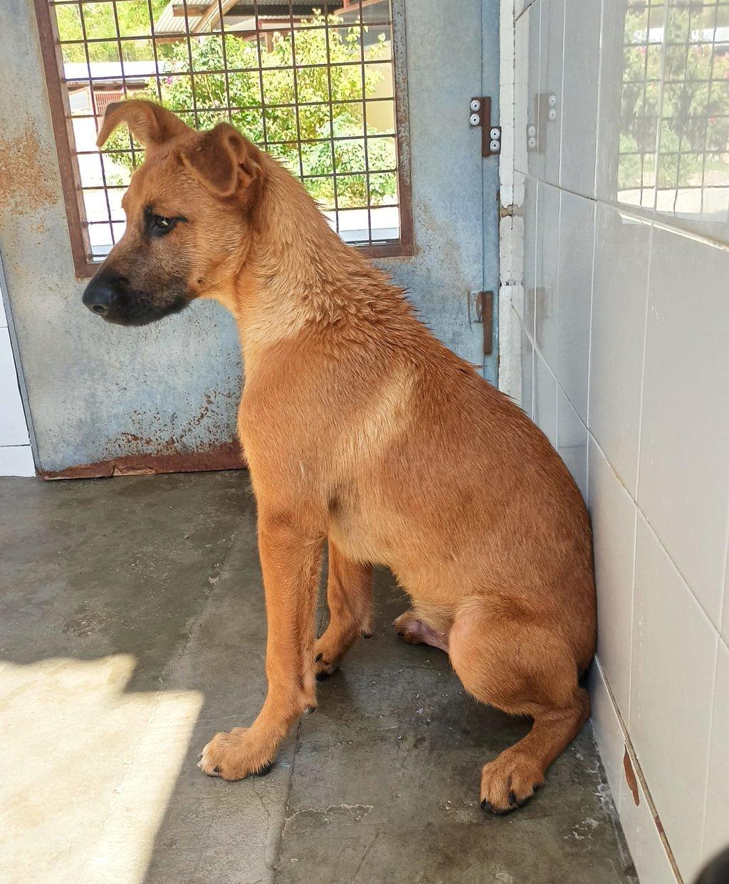 Bildertagebuch - DUMBO, noch kleiner Hundemann mit noch großen Ohren... RESERVIERT 39051924cd