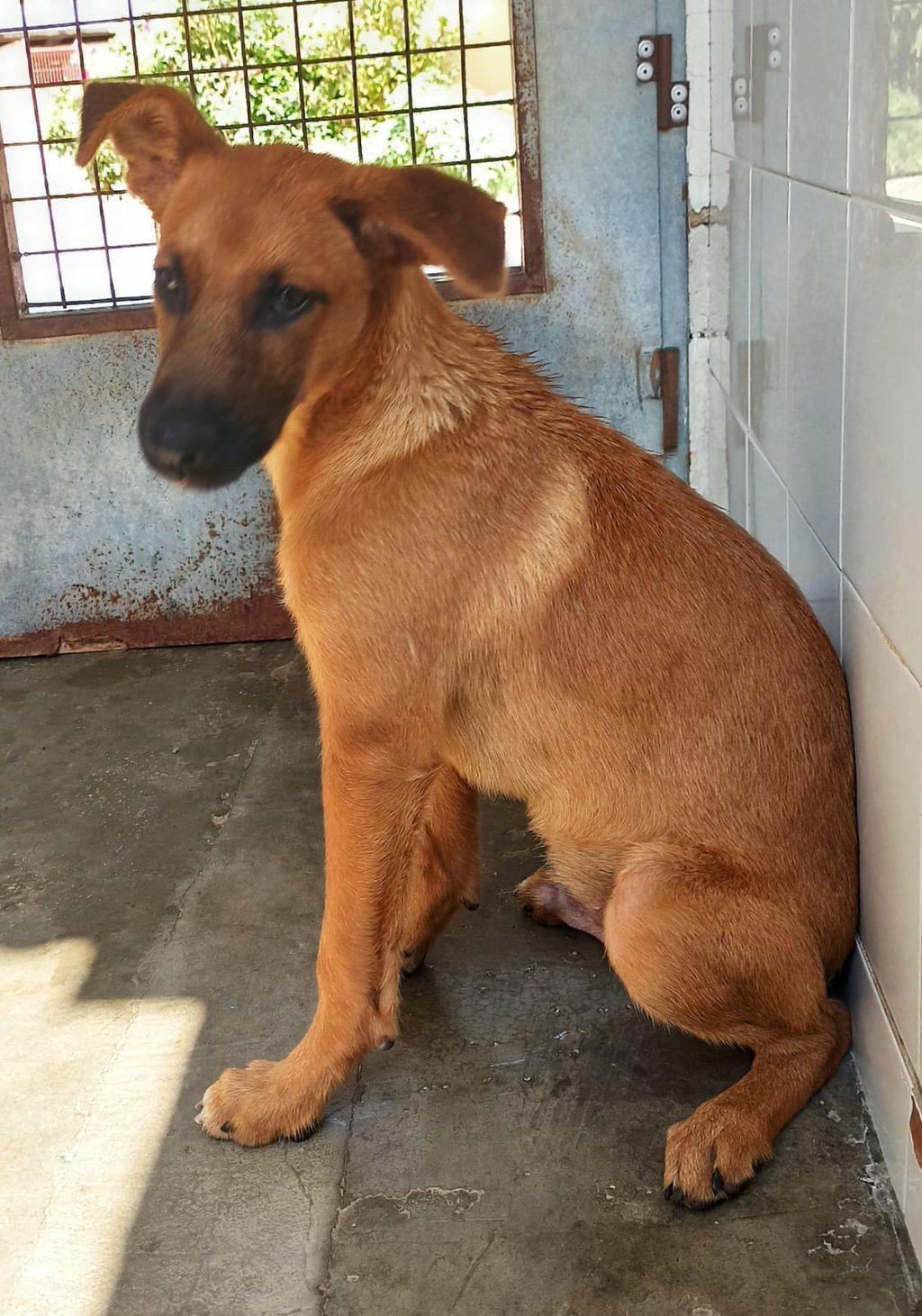 Bildertagebuch - DUMBO, noch kleiner Hundemann mit noch großen Ohren... RESERVIERT 39051925ul