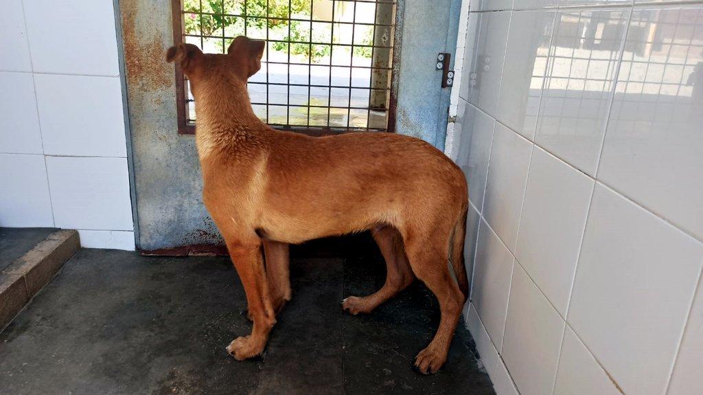 Bildertagebuch - DUMBO, noch kleiner Hundemann mit noch großen Ohren... RESERVIERT 39051926am