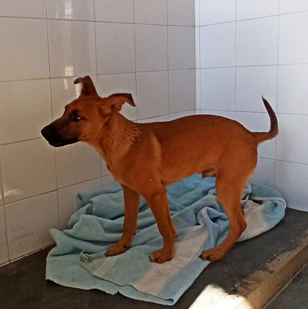 Bildertagebuch - DUMBO, noch kleiner Hundemann mit noch großen Ohren... RESERVIERT 39051927zb