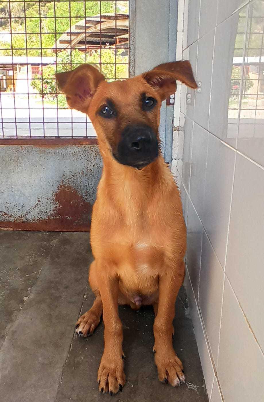 Bildertagebuch - DUMBO, noch kleiner Hundemann mit noch großen Ohren... RESERVIERT 39051928ot
