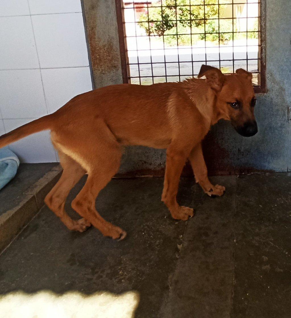 Bildertagebuch - DUMBO, noch kleiner Hundemann mit noch großen Ohren... RESERVIERT 39051929fq
