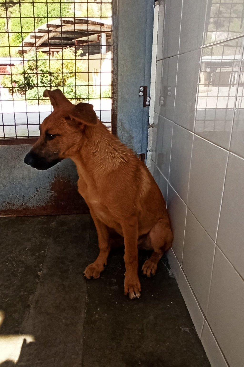 Bildertagebuch - DUMBO, noch kleiner Hundemann mit noch großen Ohren... RESERVIERT 39051932ov