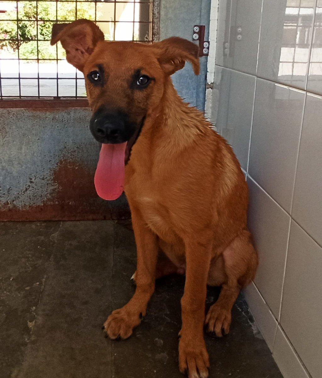 Bildertagebuch - DUMBO, noch kleiner Hundemann mit noch großen Ohren... RESERVIERT 39051933sd