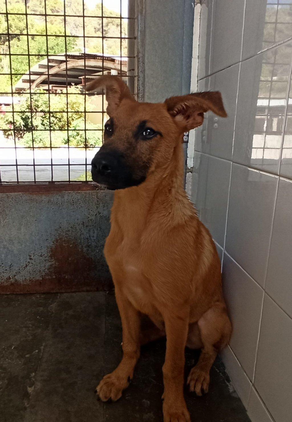Bildertagebuch - DUMBO, noch kleiner Hundemann mit noch großen Ohren... RESERVIERT 39051934gk