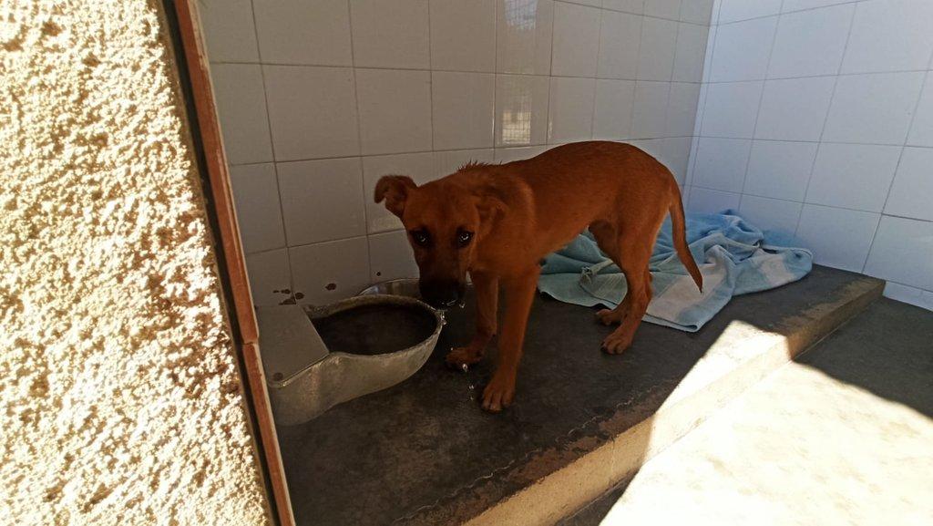 Bildertagebuch - DUMBO, noch kleiner Hundemann mit noch großen Ohren... RESERVIERT 39051935kp
