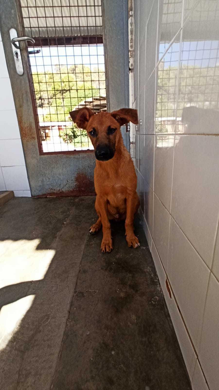 Bildertagebuch - DUMBO, noch kleiner Hundemann mit noch großen Ohren... RESERVIERT 39051936iz