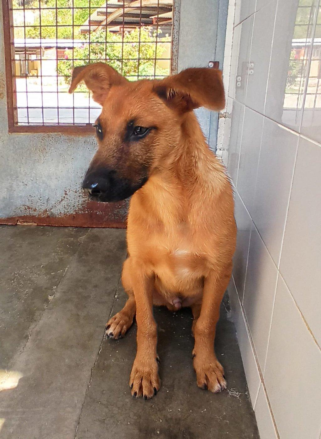 Bildertagebuch - DUMBO, noch kleiner Hundemann mit noch großen Ohren... RESERVIERT 39051937qe