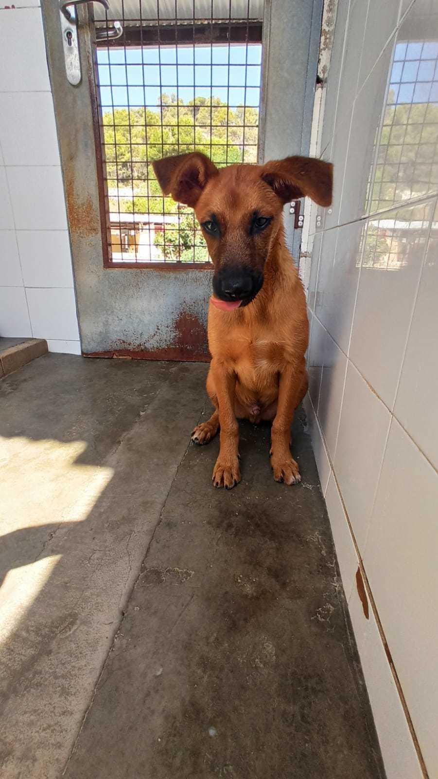 Bildertagebuch - DUMBO, noch kleiner Hundemann mit noch großen Ohren... RESERVIERT 39051938pi